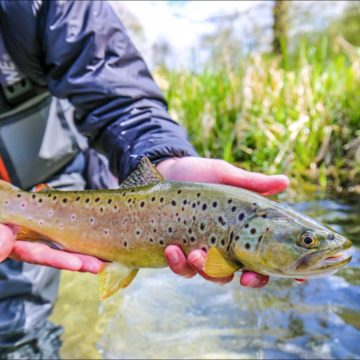 River Lambourn Chalkstream fly fishing, Dry Fly Fishing, Alex Jardine, Aardvark McLeod Dry Fly Fishing