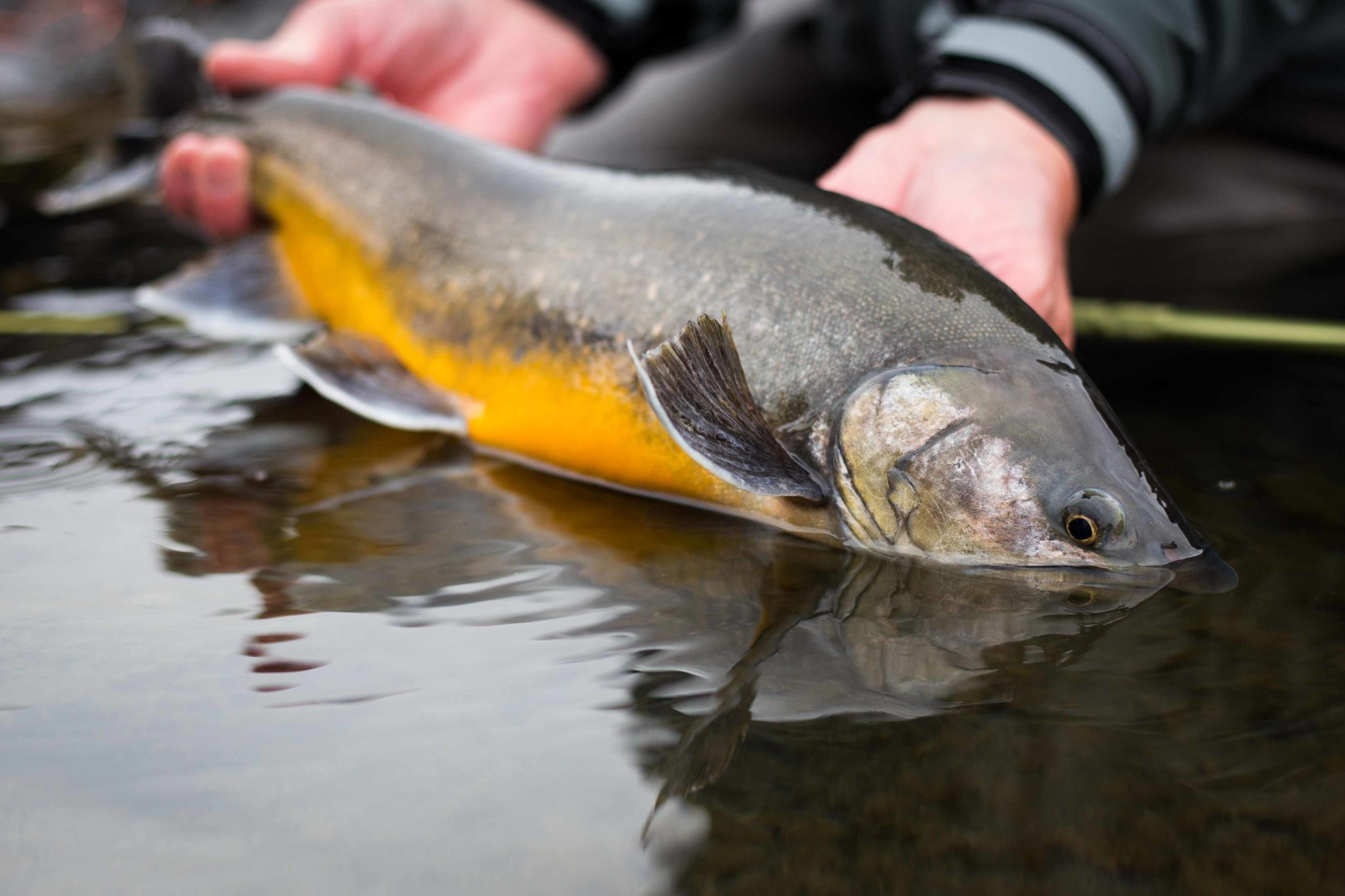 Tungnaa Iceland, char fishing Iceland, trout fishing Iceland, Fish Partner Iceland, Iceland
