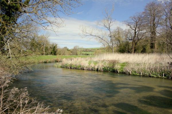 River Avon, Chalkstream, Aardvark McLeod