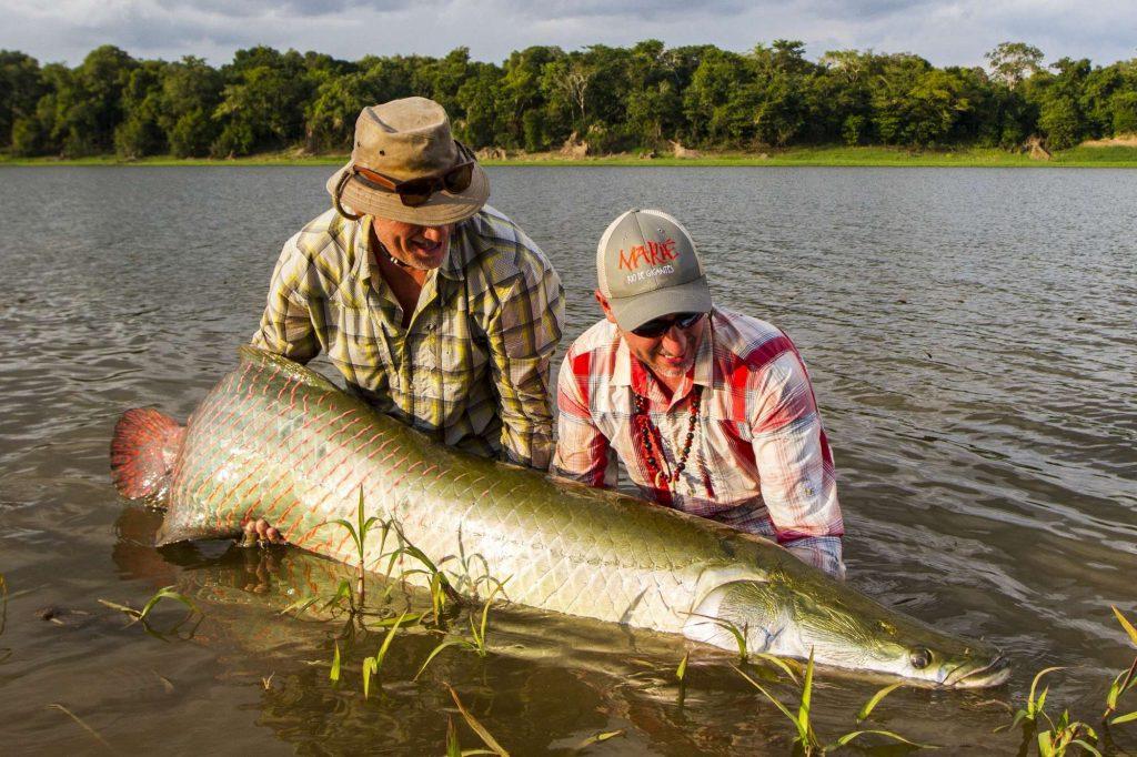 Brazil fly fishing, arapaima fishing, amazon river, Pirarucu lodge