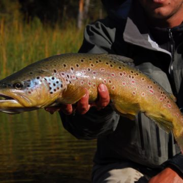 Argentina, Rio Manso, Brown Trout, Aardvark McLeod