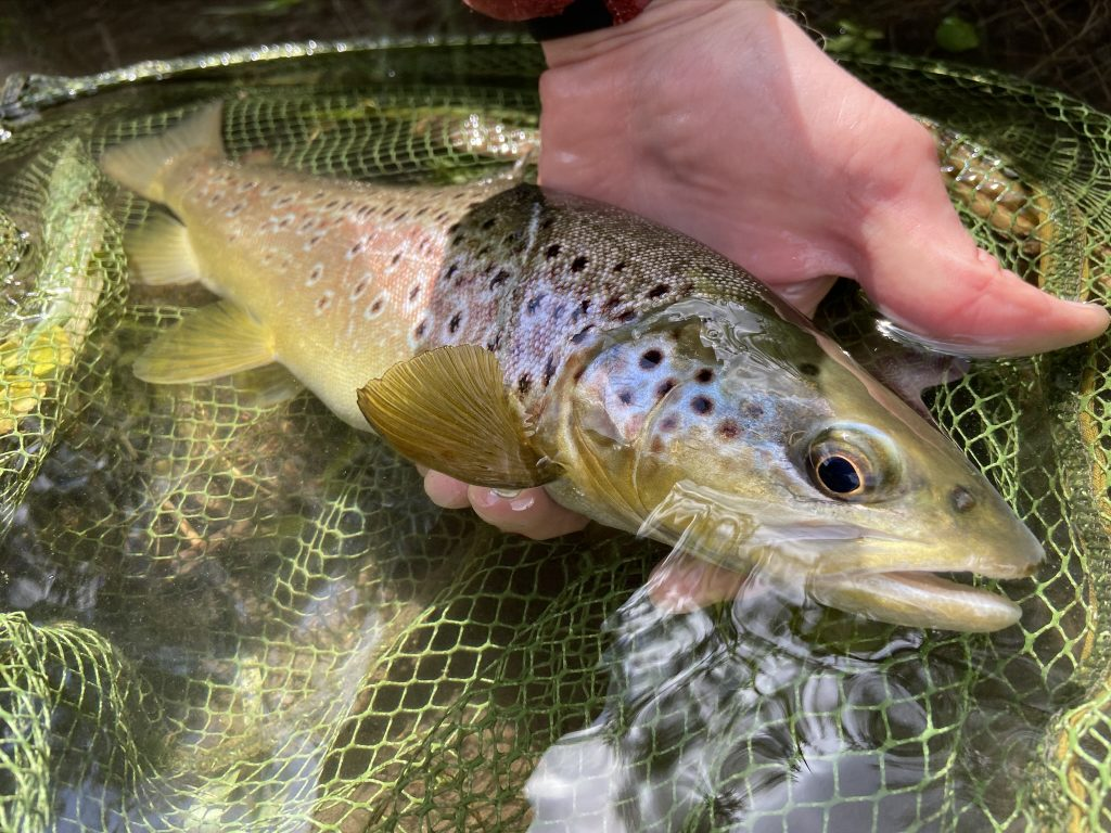 River Avon chalkstream fly fishing, Aardvark McLeod chalkstream fly fishing