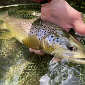 River Avon chalkstream fly fishing, Aardvark McLeod chalkstream fly fishing