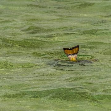 Triggerfish, Nubian Flats, Aardvark McLeod