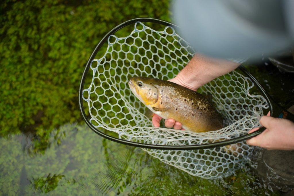 Chalkstream Fishing, River Anton, Aardvark McLeod