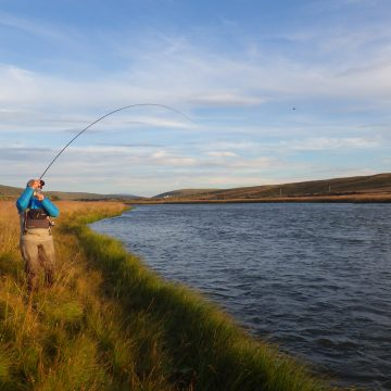 Laxardal, large brown trout, Iceland, Aardvark McLeod