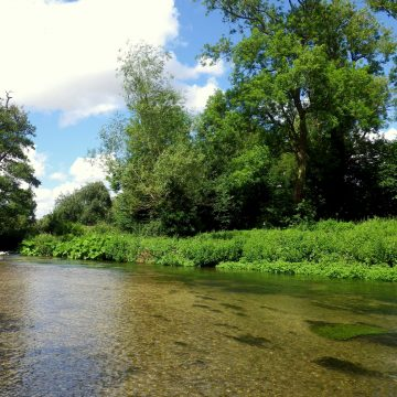 Chalkstream Fishing, River Anton, Aardvark McLeod