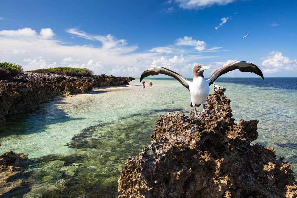 Cosmoledo, Seychelles, Aardvark McLeod