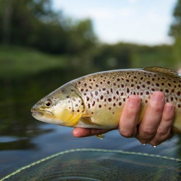 Testcombe, River Test, Chalkstream Fishing, Aardvark McLeod