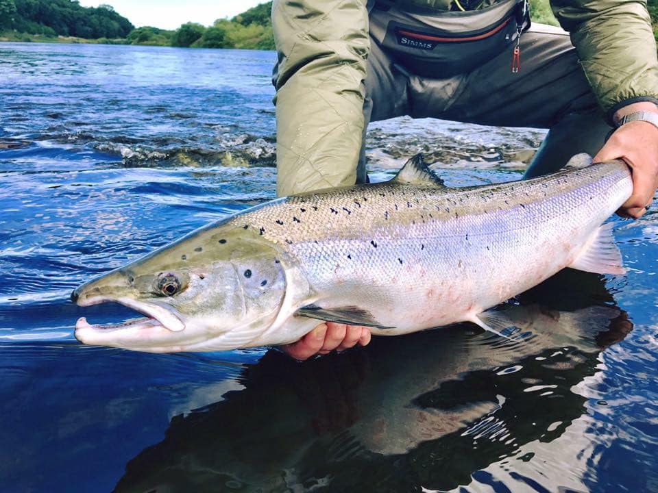 River Tweed Salmon Fishing, Chasing Fins Salmon Fishing, Scotland Salmon Fishing, Aardvark McLeod Salmon Fishing