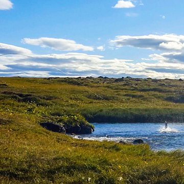 Deildara, Iceland, Aardvark MCLeod