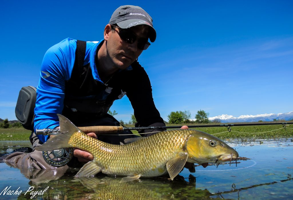 Spanish Pyrenees, Zebra Trout, trout fishing, fishing in the Pyrenees, Aardvark McLeod, Spain