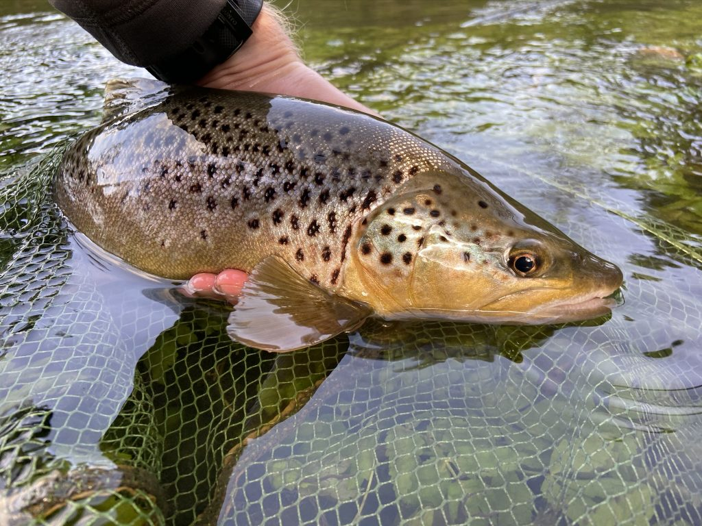 River Wylye at Langford Lakes, Chalkstream Fly Fishing, Aardvark McLeod