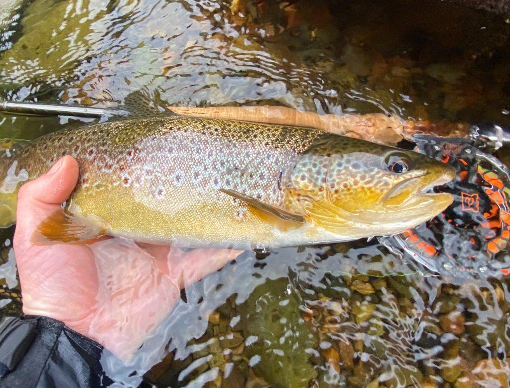 River Eden, Trout Fishing, Cumbria