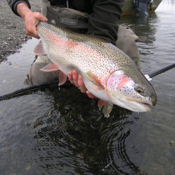 Alaska, Alaska West, Rainbow Trout, Aardvark McLeod